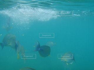 ニューカレドニアのアンスバタから水上タクシーで行ける島、カナール島の海中の写真・画像素材[1826031]