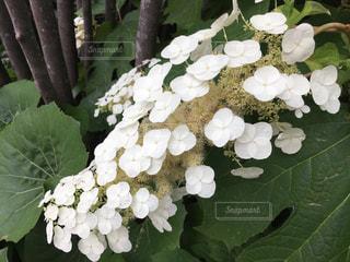 花のクローズアップの写真・画像素材[2181596]