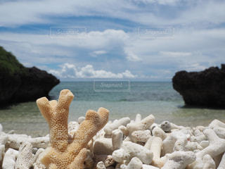 波照間島のナリサ浜(サンゴ浜)の写真・画像素材[2340561]