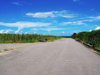 最南端の碑に行く途中の、海の見える道の写真・画像素材[2387403]