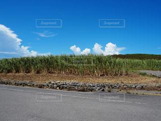 最南端の碑に行く途中の道の写真・画像素材[2387414]