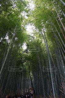 フォレスト内のツリー - No.1067505