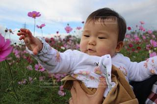 赤ちゃんとコスモスの写真・画像素材[1604106]
