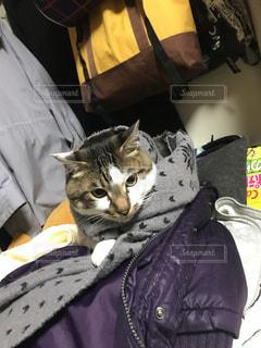 猫のソナタの写真・画像素材[1074813]