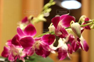 近くの花のアップの写真・画像素材[1076207]