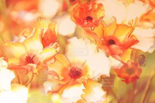 花のアップの写真・画像素材[1087378]