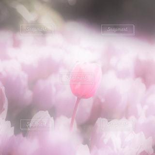 花のアップの写真・画像素材[1087393]