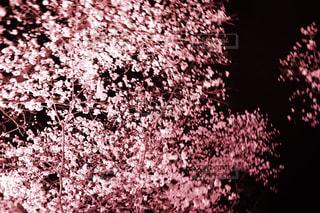 近くの花のアップの写真・画像素材[1087404]