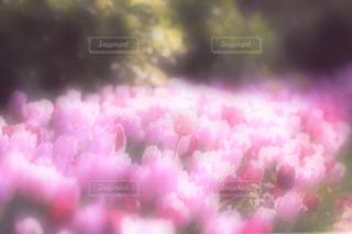 近くの花のアップの写真・画像素材[1087405]