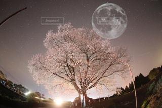 月と桜の写真・画像素材[1087413]
