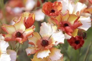 花のアップの写真・画像素材[1088254]