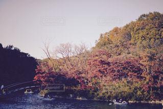 自然の写真・画像素材[130037]
