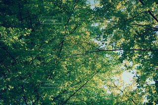 自然の写真・画像素材[130038]