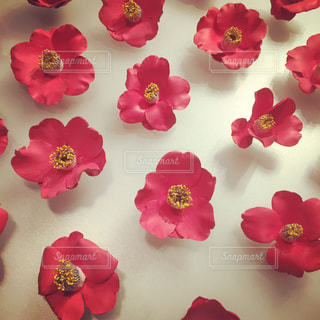 花の写真・画像素材[154022]