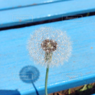 自然の写真・画像素材[154070]
