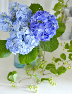 花の写真・画像素材[158657]