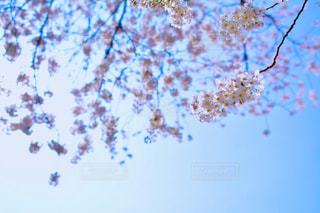 近くの木のアップの写真・画像素材[1088830]