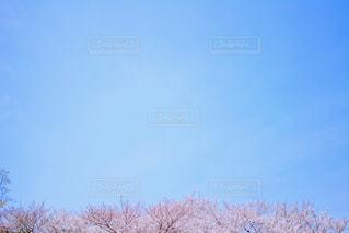 近くの木のアップの写真・画像素材[1088831]