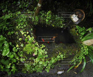 京都_貴船_道端の水槽の写真・画像素材[1070396]