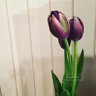 花の写真・画像素材[14672]