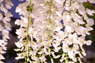近くの花のアップの写真・画像素材[1070988]