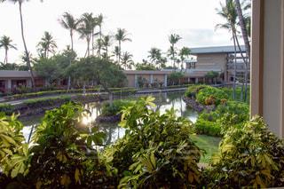 ハワイ島 ヒルトンワイコロアビレッジの写真・画像素材[1071028]