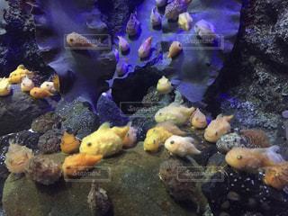 江ノ島水族館の写真・画像素材[1139246]