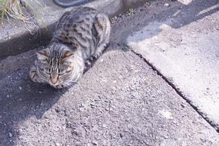 散歩道の猫の写真・画像素材[2091145]