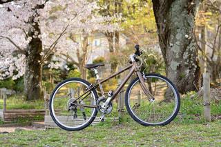 愛車と桜の写真・画像素材[1074033]