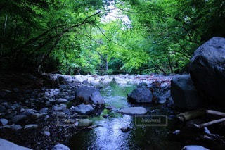 自然の写真・画像素材[35299]