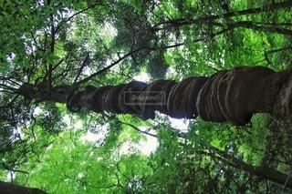 自然の写真・画像素材[35314]