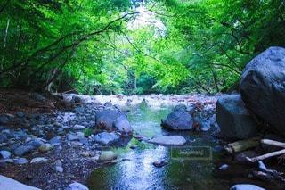 自然の写真・画像素材[35310]