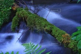自然の写真・画像素材[35501]