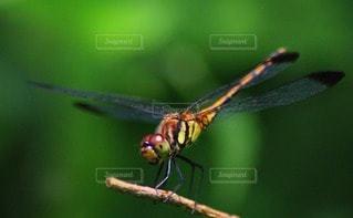 自然の写真・画像素材[45262]