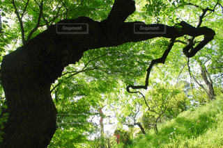 自然の写真・画像素材[493978]