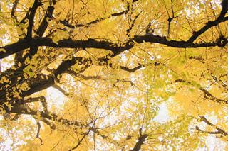 近くの木のアップの写真・画像素材[1627319]