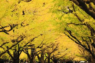 背景の山と木の写真・画像素材[1628865]