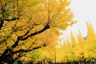 近くの木のアップの写真・画像素材[1628866]