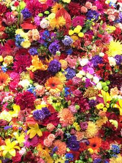 一面の花の写真・画像素材[2250101]