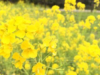 黄色の視界の写真・画像素材[2250117]