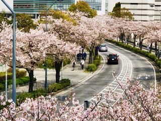 春の通りの写真・画像素材[2256829]