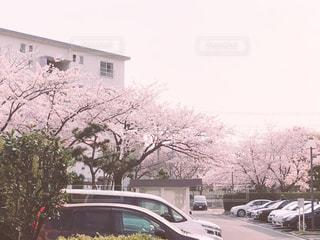 団地の桜の写真・画像素材[2256830]