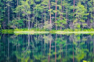 新緑の池の写真・画像素材[2259779]