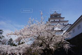 桜と鶴ヶ城の写真・画像素材[1072730]