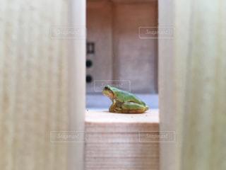 上に座ってカエルの写真・画像素材[1078307]