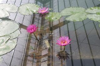 テーブルの上のピンクの花で一杯の花瓶 - No.1073052