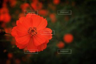 近くの花のアップ - No.1073853