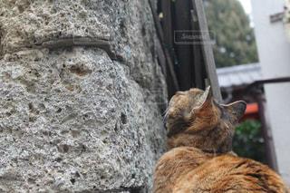 上を向く猫の写真・画像素材[1073855]
