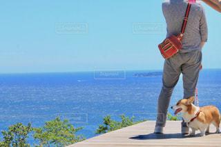 犬を持っている人 - No.1174749
