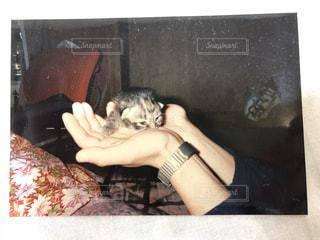 ソファで横になっている猫の写真・画像素材[1272676]